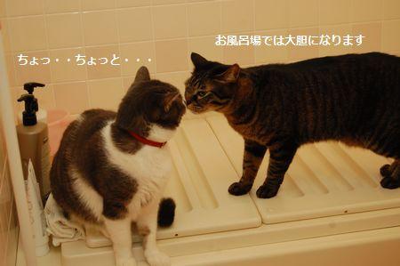 20120111kotetsumiikun3.jpg