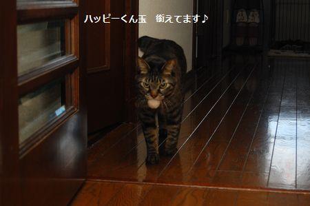 20120115kotetsu4.jpg
