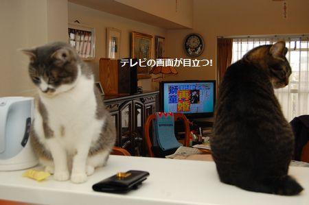 20120120kotetsumiikun2.jpg
