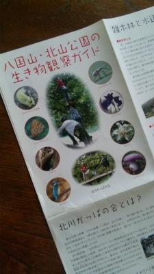 八国山・北山公園の生き物観察ガイド