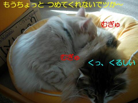 sasu10.jpg