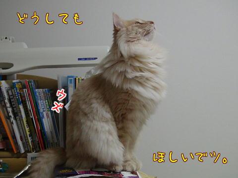 sasu112.jpg