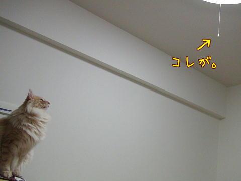 sasu113.jpg