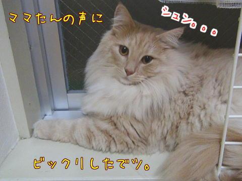 sasu117-1.jpg