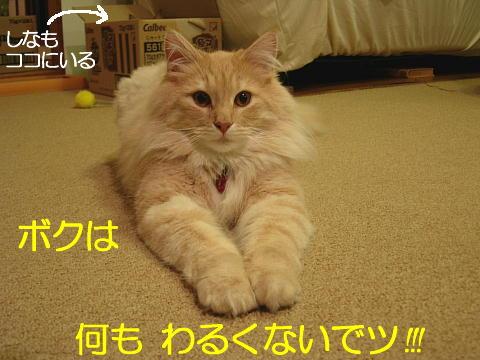 sasu24.jpg