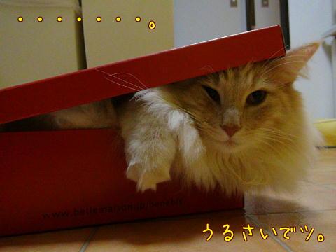 sasu46.jpg