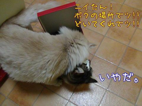 sasu50.jpg