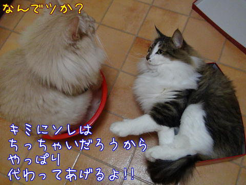sasu59.jpg