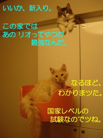 sasu7-1.jpg