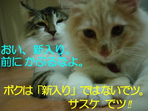 sasu8.jpg