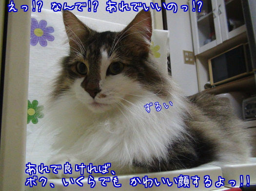 sato1164-a.jpg
