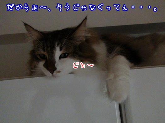 sato1175-a.jpg
