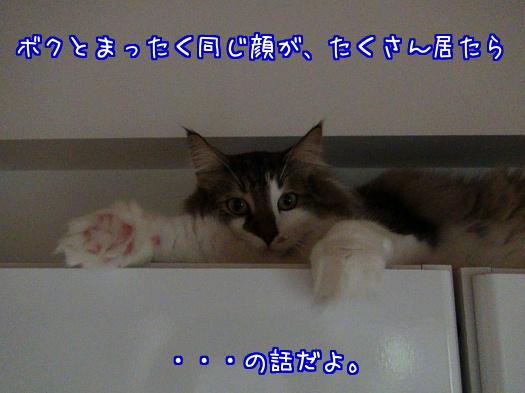 sato1176-a.jpg