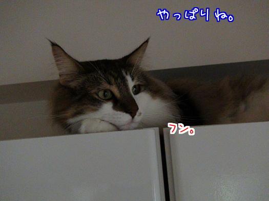 sato1177-a.jpg