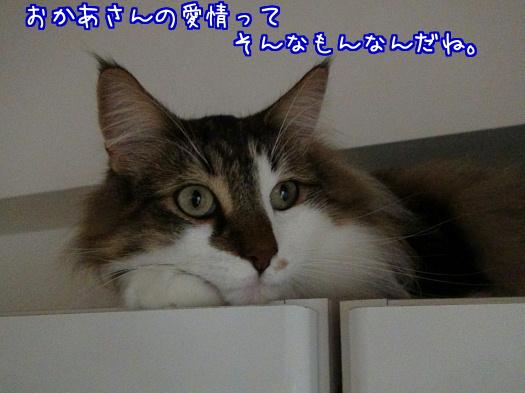 sato1178-a.jpg