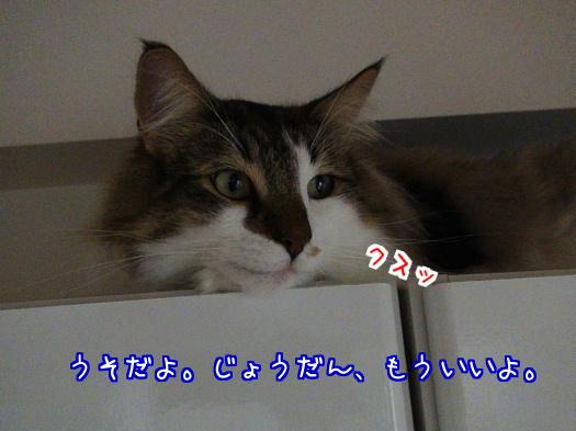 sato1179-a.jpg