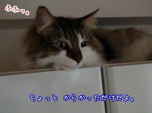 sato1180-a.jpg