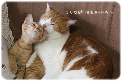 sayomaru2-772.jpg