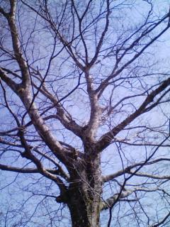 あるところの木