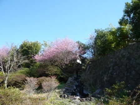 梅と滝(?)