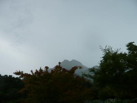 雨の日に見えた