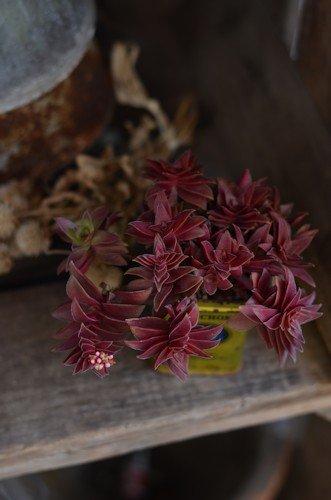 紅葉祭り20120224_02