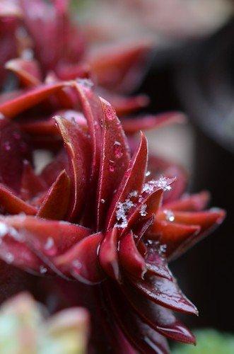 紅葉祭り20120229