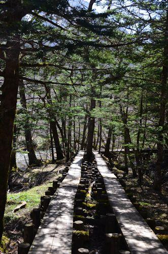 上高地岳沢湿原20120428