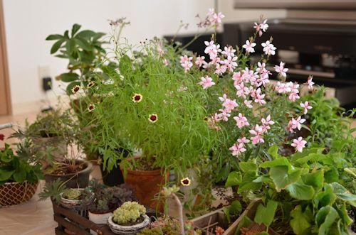 避難中の植物20120620