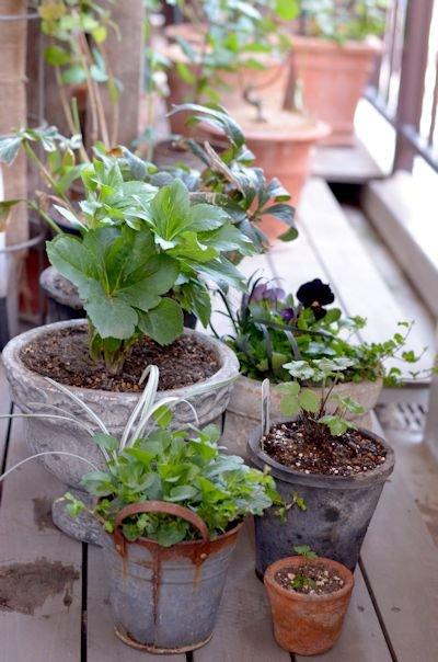 植え替えした植物20121118
