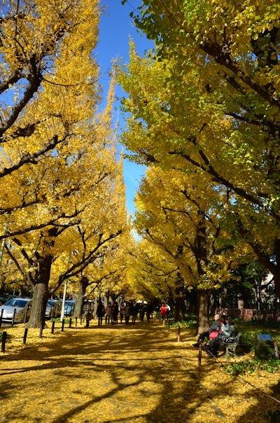外苑の銀杏並木20121205_03