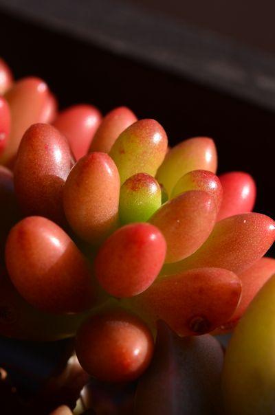 虹の玉20121207