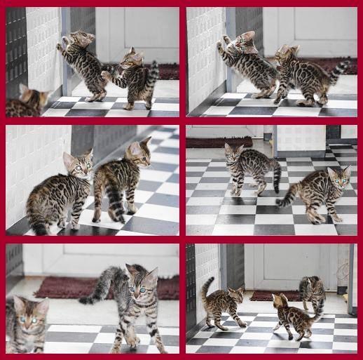 子猫遊び1
