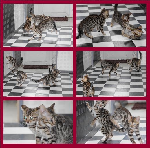 子猫遊び2