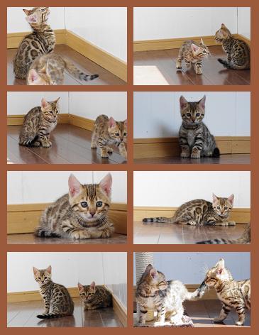 ジャス子猫3