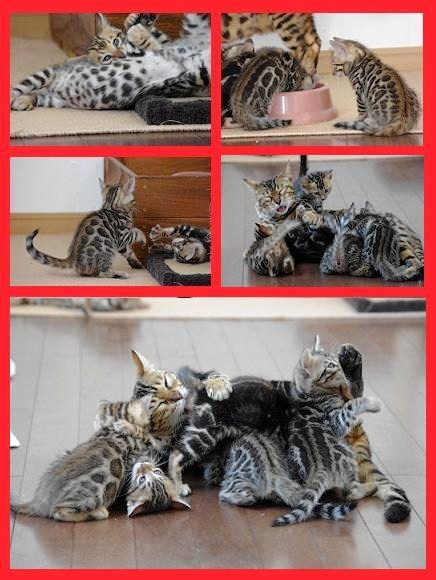 2012子猫遊び