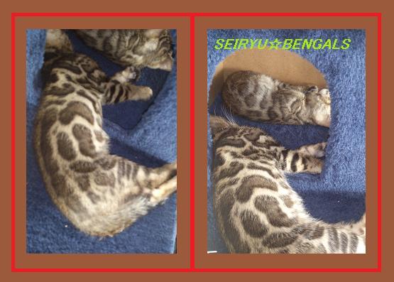 2012 Kitten.1