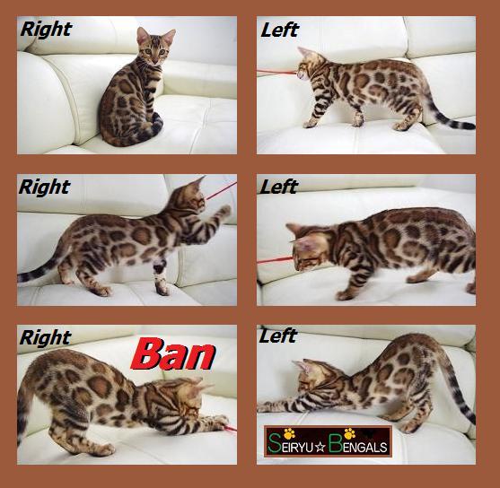 2012  Kitten  Ban君