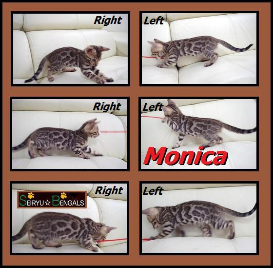 2012 Kitten  モニカちゃん2