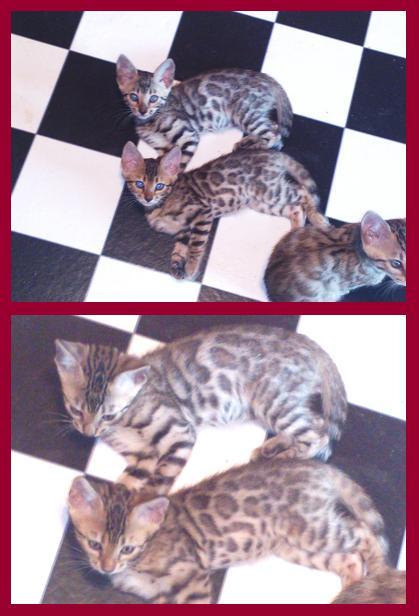 22012 Kitten 6月生まれ