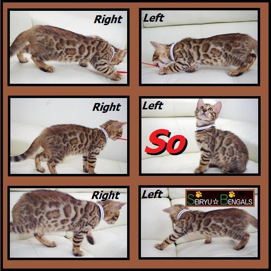 2012 Jus Kitten 1