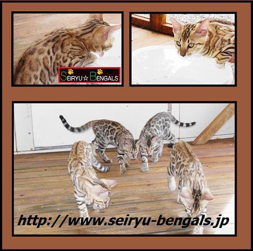 2012 Kitten 11