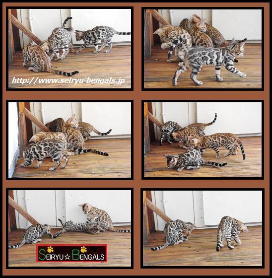 2012 Kitten 14