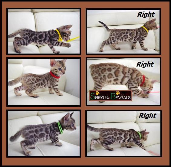 2012 Kitten 変化1