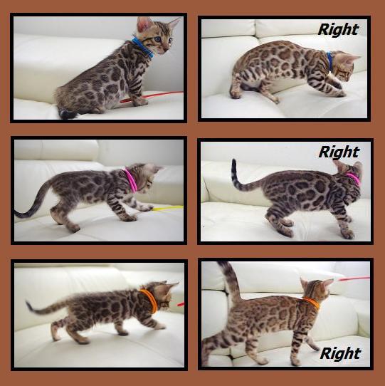 2012 Kitten 変化2