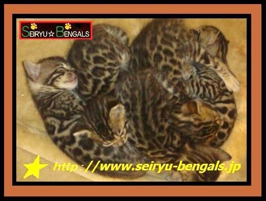 2012 Kitten 9月生まれ