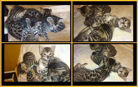 2012 Kitten 9月3