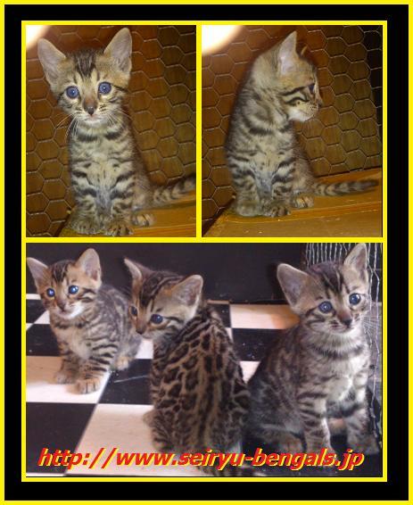 2012 Kitten 9月生まれ5