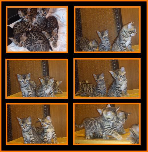 2012 Kitten 9月生まれ4