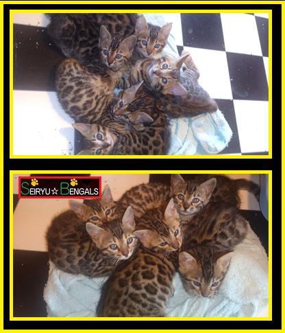 2012 Kitten 9月生まれ6